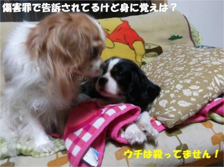 05_convert_20131031185826.jpg