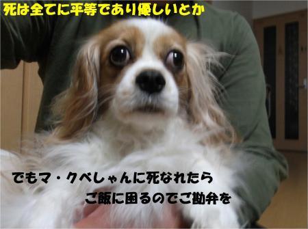 06_convert_20130416174150.jpg