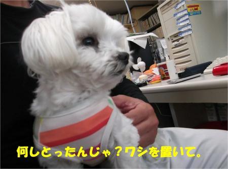 06_convert_20130419172613.jpg