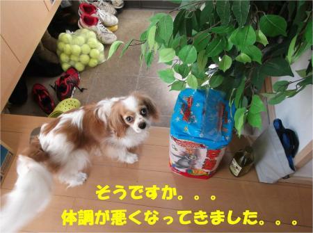 06_convert_20130507172109.jpg