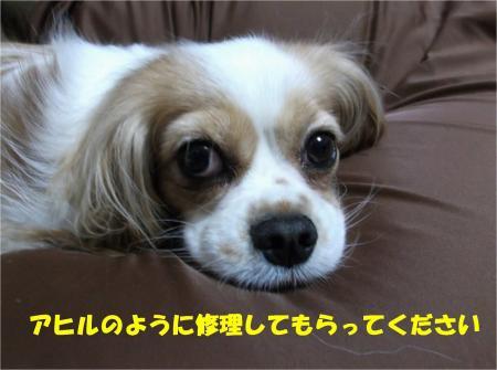06_convert_20130521190751.jpg