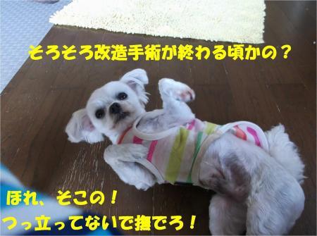 06_convert_20130604173353.jpg
