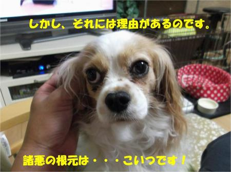 06_convert_20130607184530.jpg