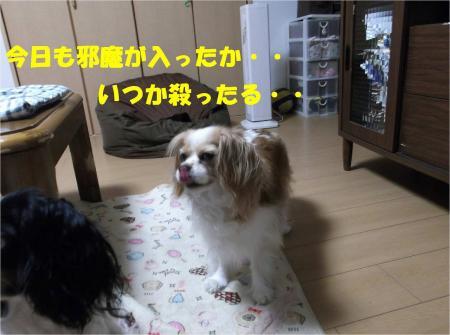 06_convert_20130611165505.jpg