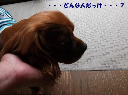 06_convert_20130612171216.jpg