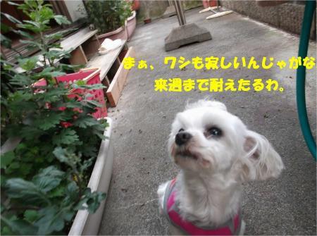 06_convert_20130617180232.jpg