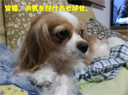 06_convert_20130618174056.jpg