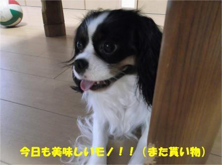 06_convert_20130625172655.jpg