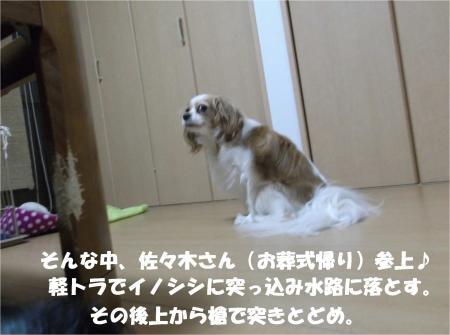 06_convert_20130627171442.jpg
