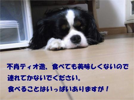 06_convert_20130703165802.jpg