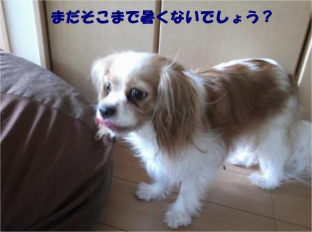 06_convert_20130708171146.jpg