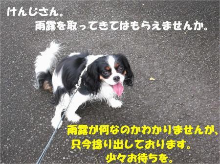06_convert_20130722145827.jpg