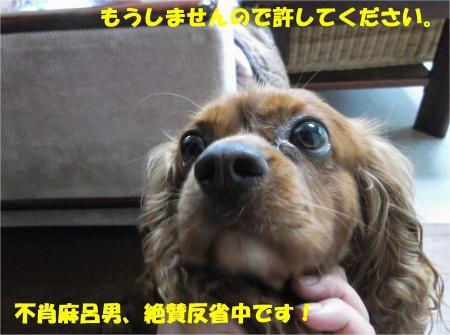 06_convert_20130724161333.jpg