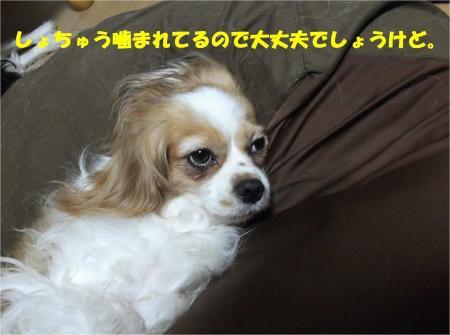 06_convert_20130726180324.jpg