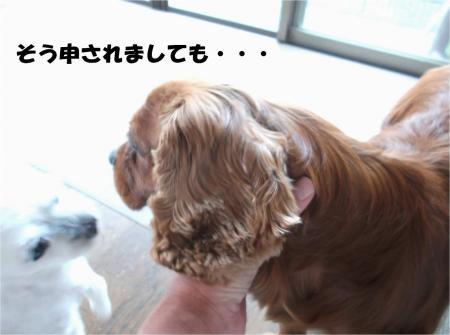 06_convert_20130730180511.jpg
