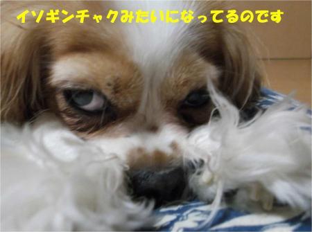 06_convert_20130731170927.jpg