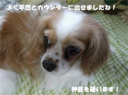 06_convert_20130802180048.jpg