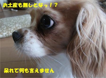 06_convert_20130819173758.jpg