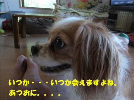 06_convert_20130820181347.jpg