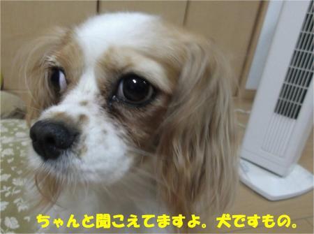 06_convert_20130822160653.jpg