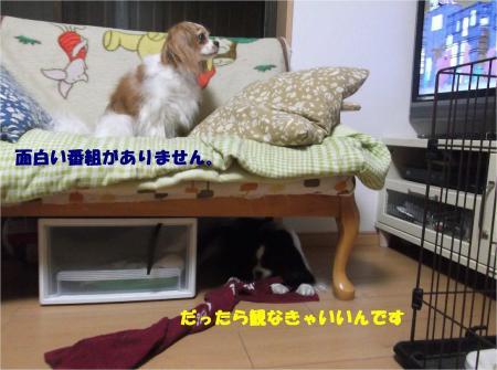 06_convert_20130823180836.jpg