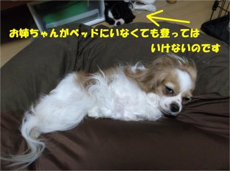 06_convert_20130829184046.jpg