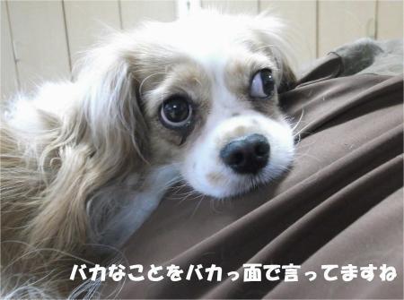 06_convert_20130905174506.jpg