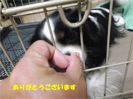 06_convert_20130906185951.jpg
