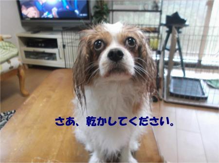 06_convert_20130909170733.jpg