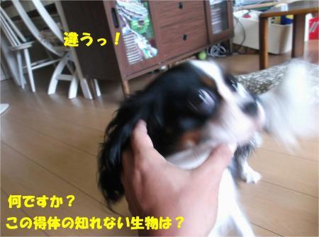 06_convert_20130910173644.jpg