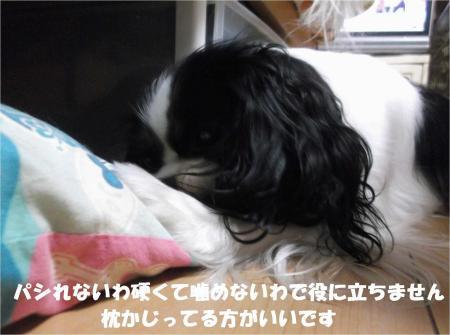 06_convert_20130919172216.jpg