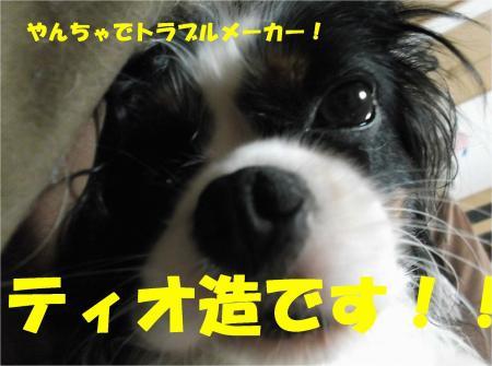 06_convert_20130927185456.jpg