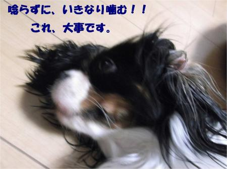 06_convert_20131005150053.jpg
