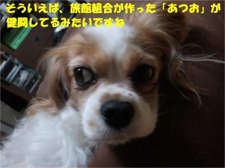 06_convert_20131010174220.jpg