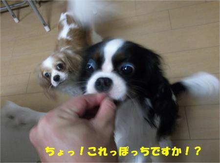 06_convert_20131011175957.jpg