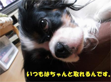 06_convert_20131023175828.jpg
