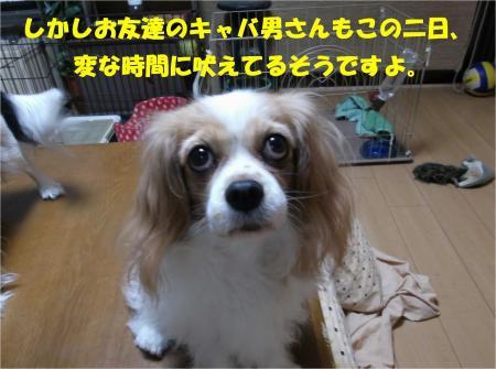 06_convert_20131024183419.jpg
