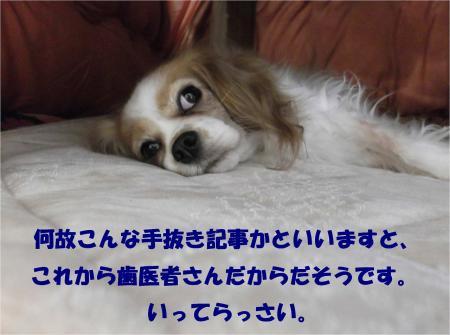 06_convert_20131203182017.jpg