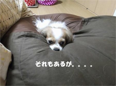 07_convert_20130403174647.jpg