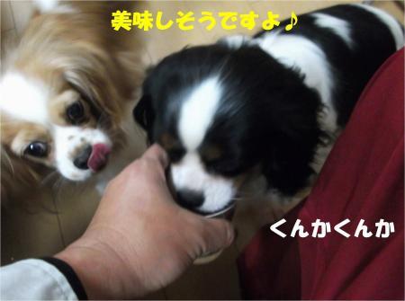 07_convert_20130404181227.jpg
