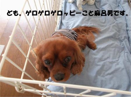 07_convert_20130419172624.jpg