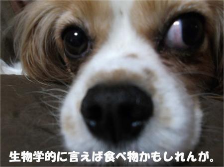 07_convert_20130515175749.jpg