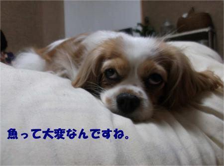 07_convert_20130523175840.jpg