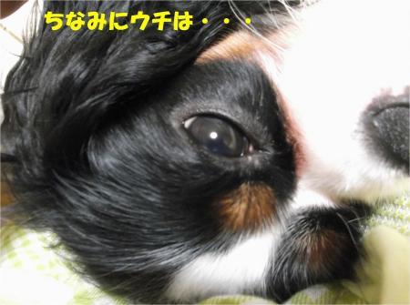 07_convert_20130628161644.jpg