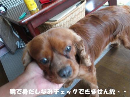 07_convert_20130730180522.jpg