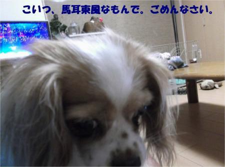 07_convert_20130805175727.jpg
