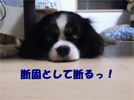 07_convert_20130821173757.jpg