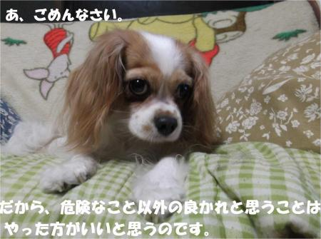 07_convert_20130823180847.jpg