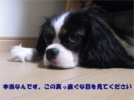 07_convert_20130903175228.jpg