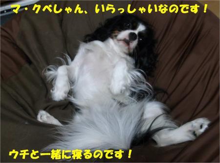 07_convert_20130920184404.jpg